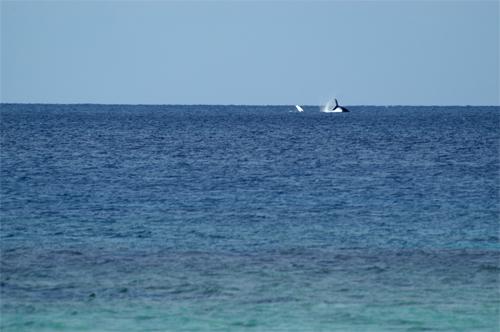 2/13 大浜でクジラ_a0010095_1895956.jpg