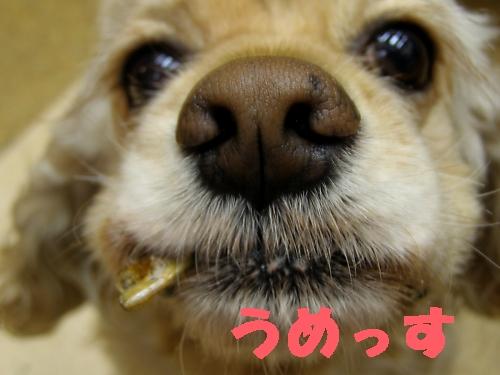 b0067012_1414848.jpg