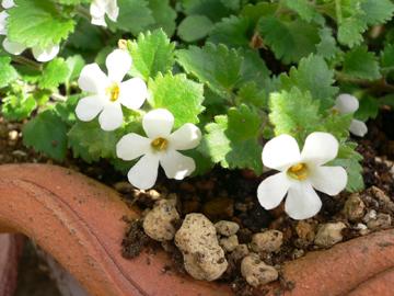 白い花 07-2_c0069048_6205981.jpg