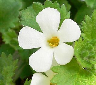 白い花 07-2_c0069048_6252410.jpg