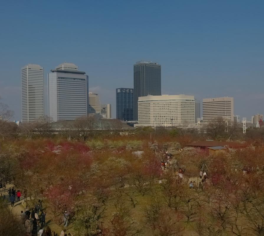 大阪城公園 梅速報 1_f0021869_19113883.jpg