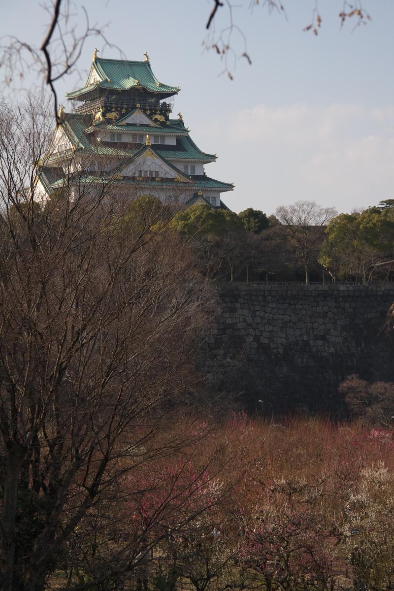 大阪城公園 梅速報 1_f0021869_19275026.jpg