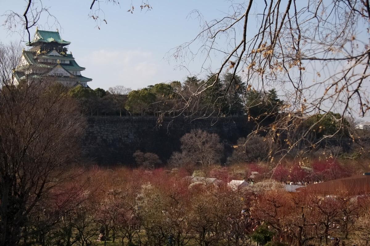 大阪城公園 梅速報 1_f0021869_19293458.jpg