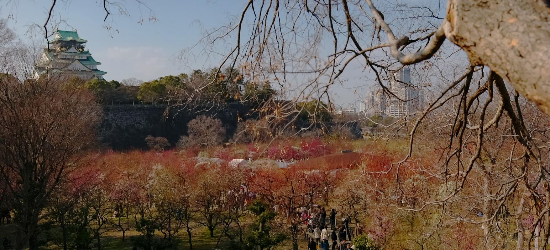 大阪城公園 梅速報 1_f0021869_193238.jpg
