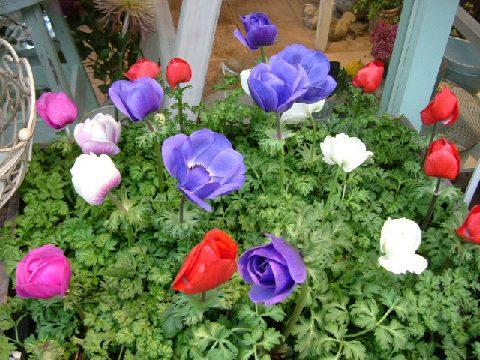 オークリーフ(バレンタインに贈る花)_f0049672_133498.jpg
