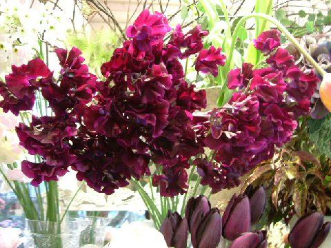 オークリーフ(バレンタインに贈る花)_f0049672_13354949.jpg