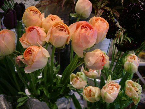 オークリーフ(バレンタインに贈る花)_f0049672_13362131.jpg