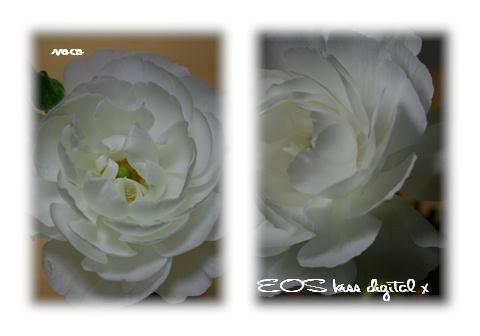 f0122193_23254251.jpg