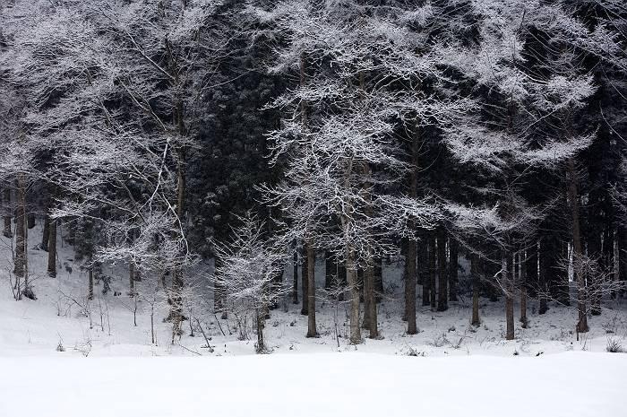雪国_b0074098_858219.jpg