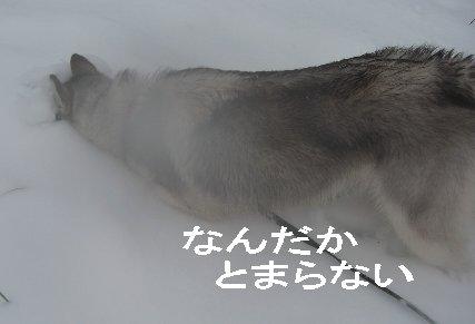 f0112407_146449.jpg