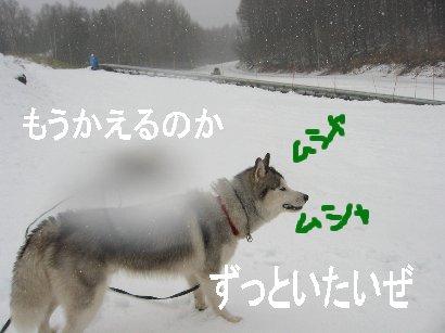 f0112407_15212289.jpg
