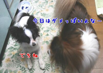 d0013149_10255324.jpg