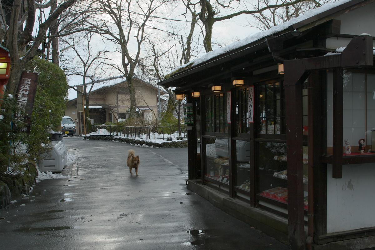 京都 大原 <三千院> 雪景色 16_f0021869_102450.jpg