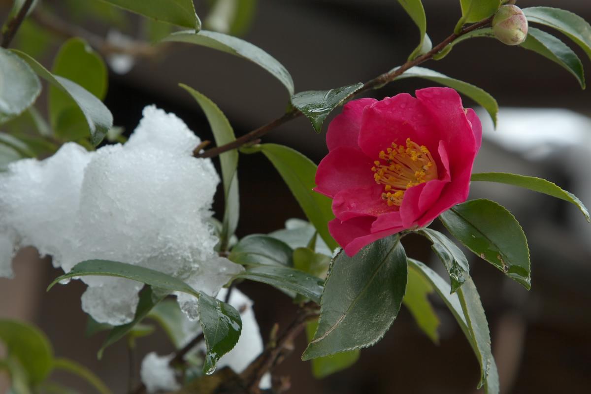 京都 大原 <三千院> 雪景色 16_f0021869_1045912.jpg