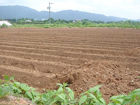 日本の畑を耕したい。_d0063218_18561313.jpg