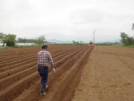 日本の畑を耕したい。_d0063218_18564422.jpg