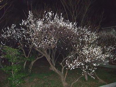 夜桜ならぬ_c0038334_22571831.jpg
