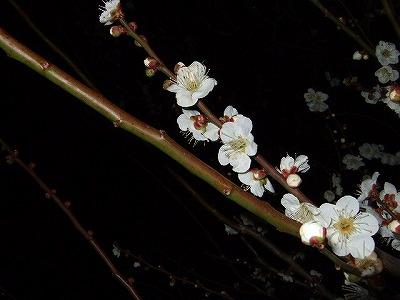 夜桜ならぬ_c0038334_22575065.jpg