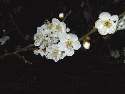 夜桜ならぬ_c0038334_2258235.jpg
