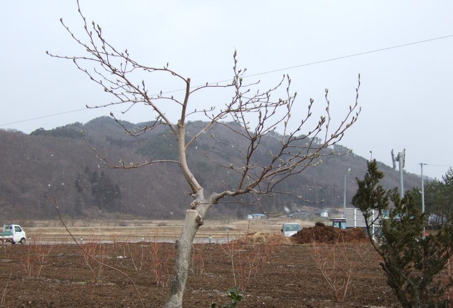 小雪ちらつく中、伝承園 + 昨日のカッパ淵_d0001843_14291778.jpg
