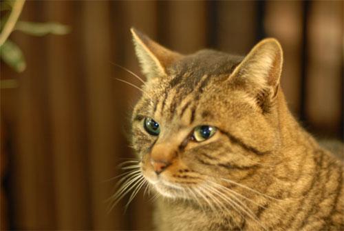 再び某店常連の猫_a0006744_23232888.jpg