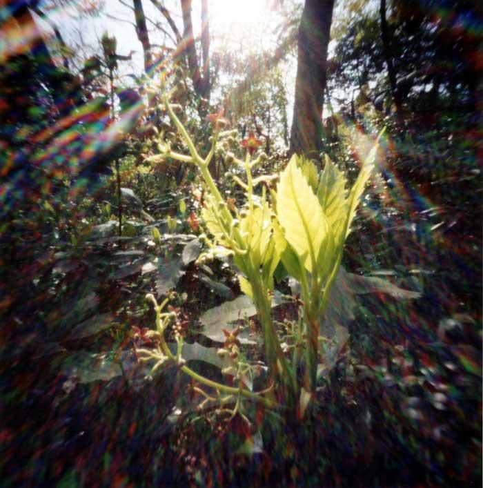 「春の光」 - 自然教育園 Pinhole Photography_f0117059_12191175.jpg