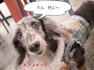 d0020869_1630670.jpg