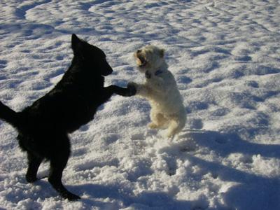 雪で大はしゃぎのジルヴァ_b0084194_20205010.jpg