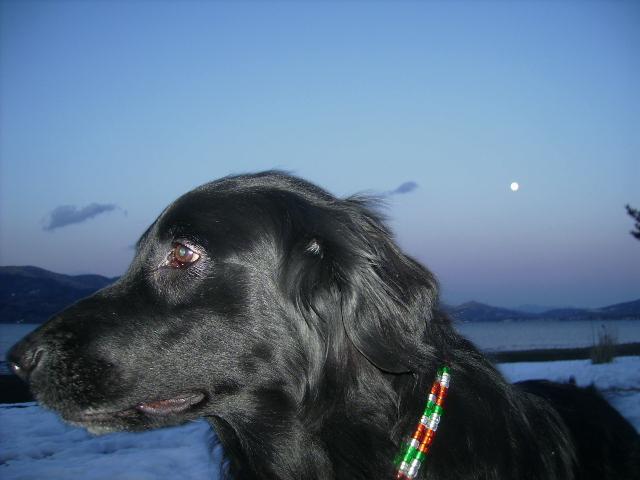素敵な満月の夜に。。。は、変身するんですか?_b0084194_2120569.jpg
