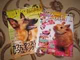 犬への思い☆_d0092605_10183634.jpg