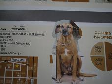 犬への思い☆_d0092605_1055168.jpg
