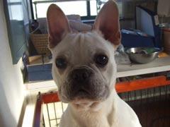 あまやん宅の犬について_b0054727_2311574.jpg