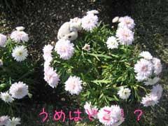 f0071732_2357256.jpg