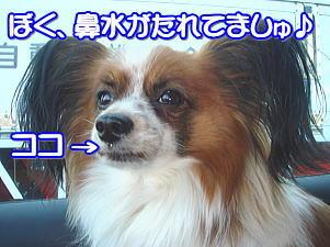 f0011845_1375916.jpg