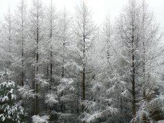 待望の雪&JWA主催歩きたくなる道500選・信玄堤_f0019247_21135181.jpg