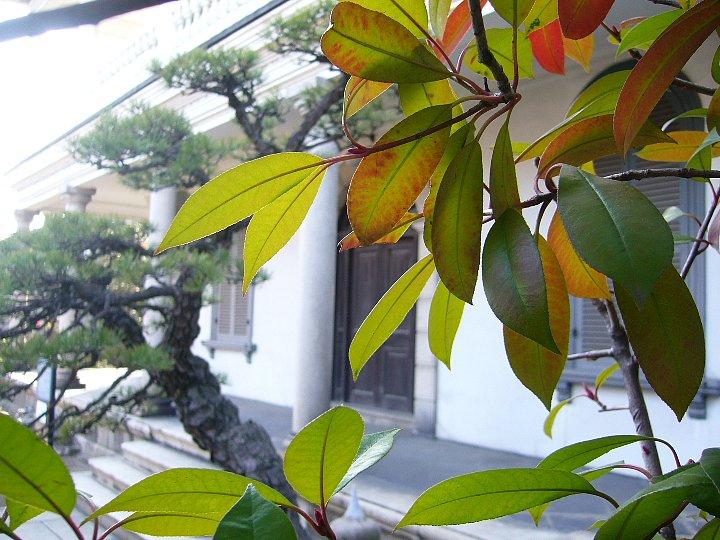 西宮市の旧辰馬喜十郎邸_c0112559_11101120.jpg