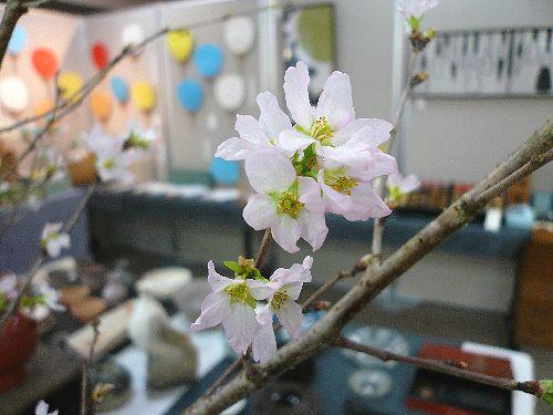 桜咲く 代官山Iスタジオ☆..。.゚。*・。♡ _a0053662_2329561.jpg