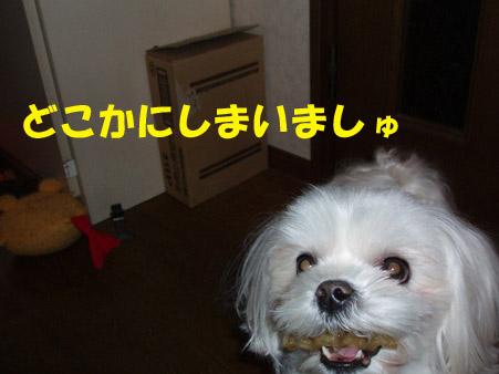 b0060071_1505838.jpg