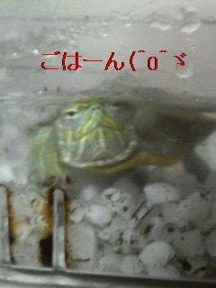 f0126418_15312780.jpg