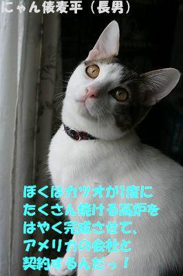 f0063729_1129483.jpg