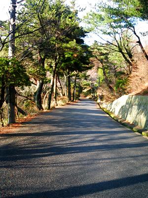 木立の中の小道。きちんと道路は舗装されています。道の下には小さな公園や登山道などがいっぱいあって、わんこを連れてのんびり散歩にまた来ようと思いました。