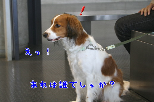 d0013149_264032.jpg
