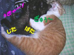 c0032073_15401094.jpg
