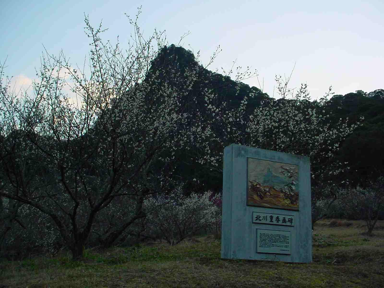 梅の花が咲いてます_f0040201_19214.jpg