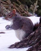 ニューヨークの街角は雪景色_b0007805_1274399.jpg