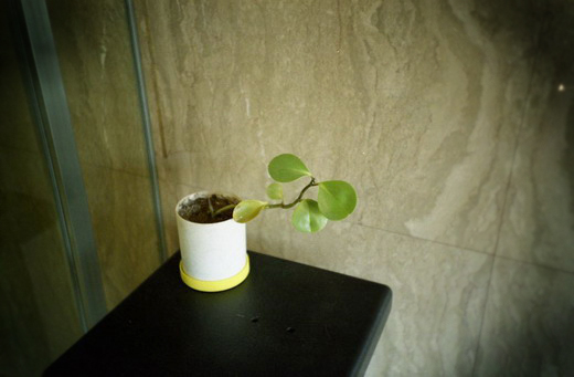 街のど真ん中のビルの玄関の植木鉢の葉っぱ_f0033205_23241721.jpg