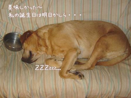 五郎の誕生日_f0064906_1720354.jpg