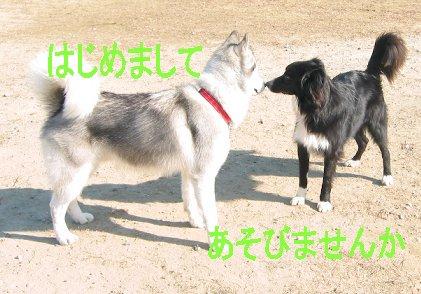 f0112407_155434100.jpg