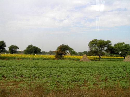 インド7 地方のあちこちで_e0048413_22582070.jpg