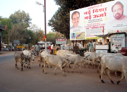 インド7 地方のあちこちで_e0048413_22592392.jpg